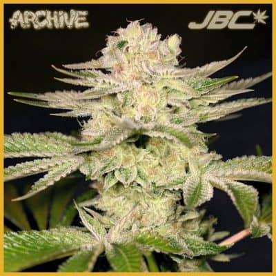 Archive Seeds | JBC Seeds